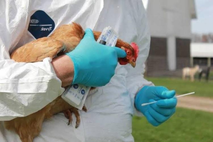 Satu Jemaah Haji Lampung Diduga <i>Suspect</i> Flu Burung