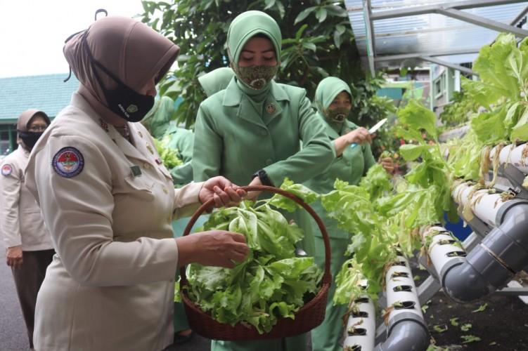 Sayuran Hidroponik Dukung Ketahanan Pangan di Tengah Pandemi