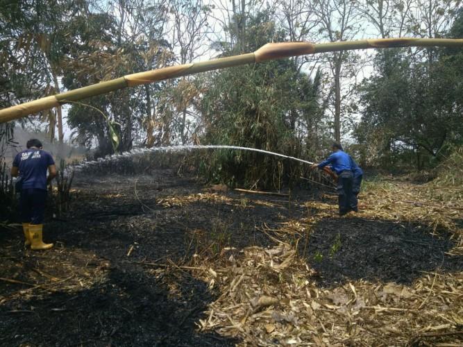 Sehari, Kebakaran Lahan di Lamsel Terjadi di Dua Lokasi