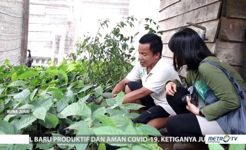 Sejumlah Organisasi Lingkungan Dorong Petani Kakao Punya Daya Saing