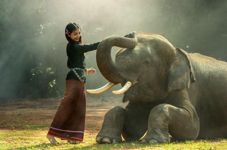 Selama 2018, 11 Gajah di Aceh Mati