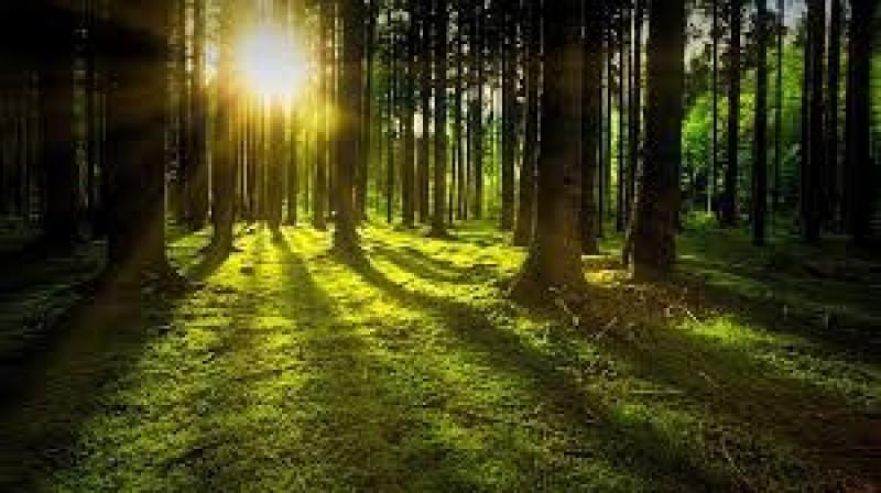 Selaras dengan Alam