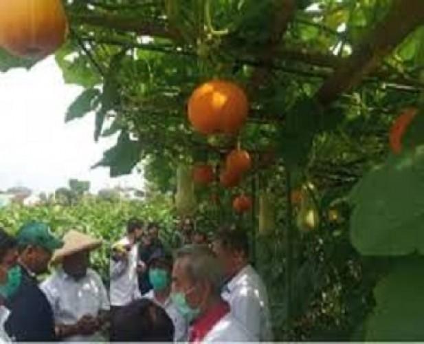 Selisih Pendapatan Agrowisata Melon, Unila Laporkan Pihak Ketiga