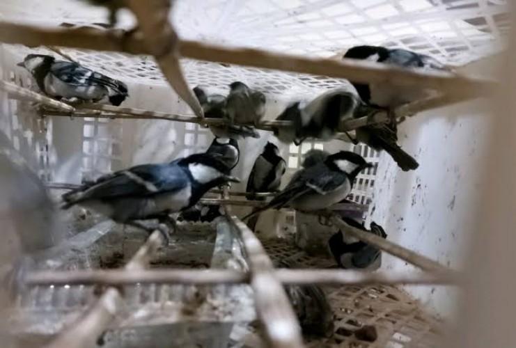 Sopir Penyelundup 135 Ekor Burung Divonis 16 Bulan Penjara
