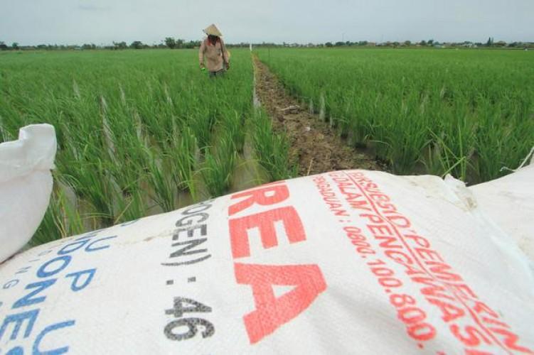 Stok Pupuk Bersubsidi di Lampung Sampai 1,5 Bulan Mendatang