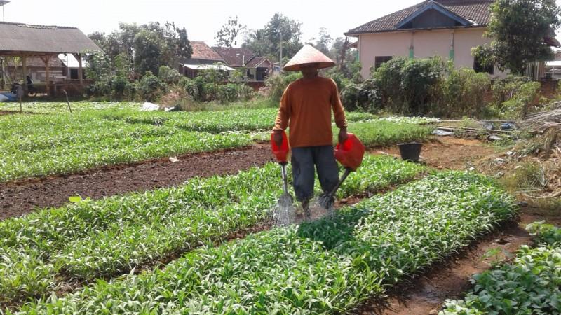 Sumur Bor Jadi Alternatif Pengairan Petani Sayur di Musim Kemarau
