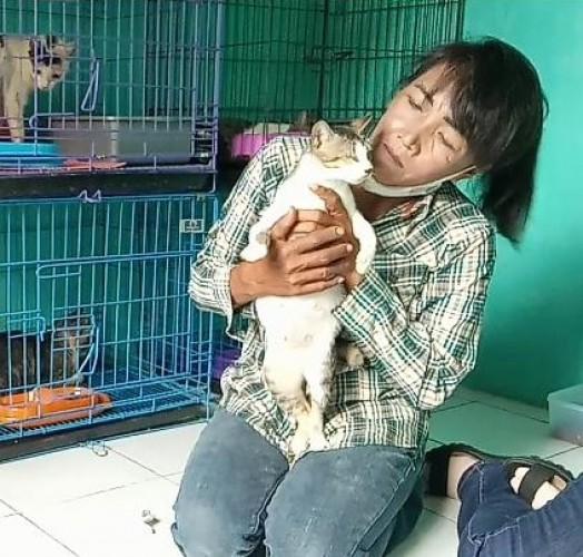 Susan, 'Dewi' Penyelamat Kucing Kampung di Bandar Lampung
