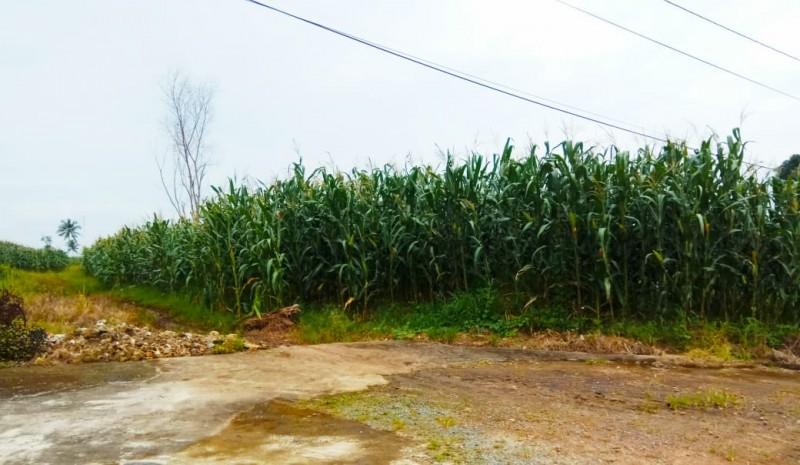 Tanah Jalinsum di Desa Kedaton Bukan Barang Sitaan KPK