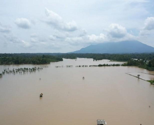 Tanaman Padi di Palas yang Terdampak Banjir Bertambah