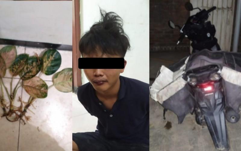 Tepergok Mencuri Aglaonema di Metro, Pemuda Asal Trimurjo Dihajar Massa