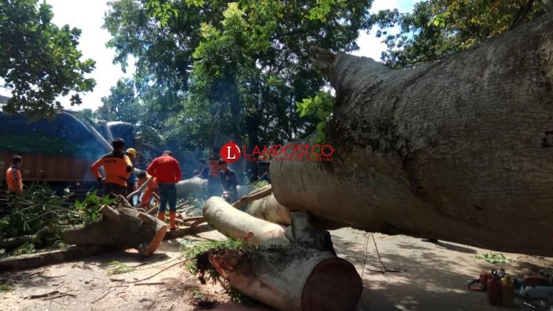 Tertutup Pohon Tumbang, Jalan Emir M Noer Dialihkan