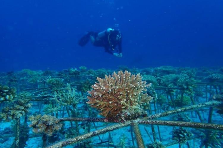 Terumbu Karang Garuda Akan Jadi Ikon Wisata Bahari Sumsel