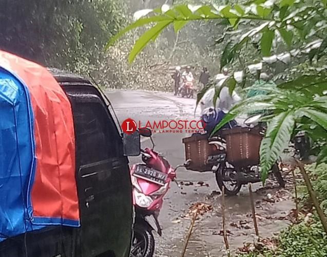 Tiga Kabupaten di Lampung Perlu Ekstra Waspada Bencana Tanah Longsor