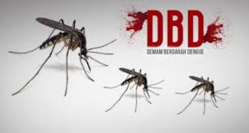 Tiga Kasus DBD di Pesisir Barat Terjadi dalam Sebulan