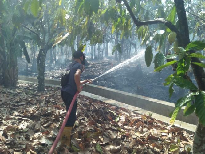 Tiga Lahan di Lamsel Terbakar dalam Sehari
