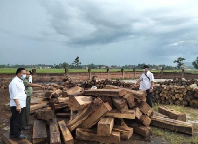 Tim Gabungan Buru Pemodal Illegal Logging di Pringsewu