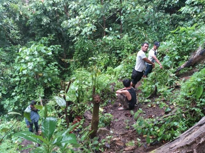 Tim Polres Tanggamus Buru Pemilik Ladang Ganja