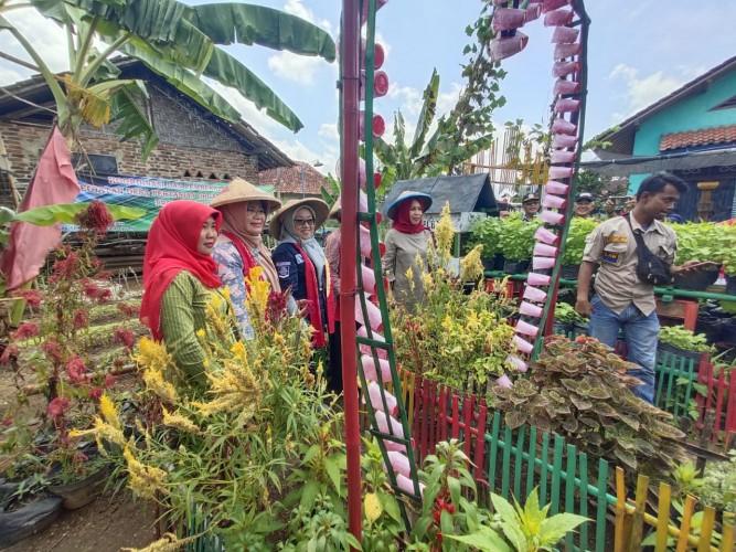 Tinggalkan Merumpi, Ibu-ibu KWT di Lamteng Hasilkan Omzet Jutaan dengan Bertanam Sayur