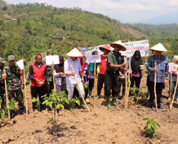 Tumpang Sari Padi-Kedelai untuk Tingkatkan Produksi Pangan