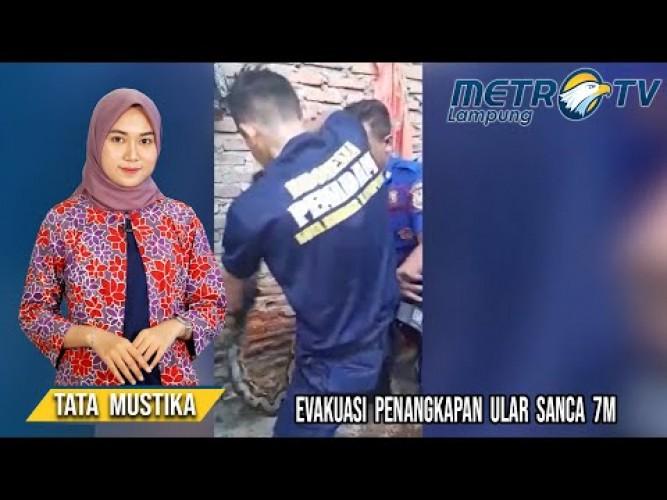 Ular Sanca Muncul di Permukiman Warga Bandar Lampung