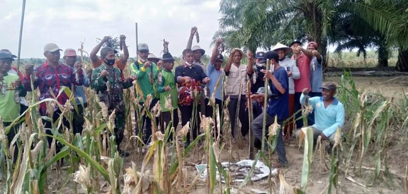 UPT Pertanian Natar dan Kelompok Tani Berburu Hama Tikus