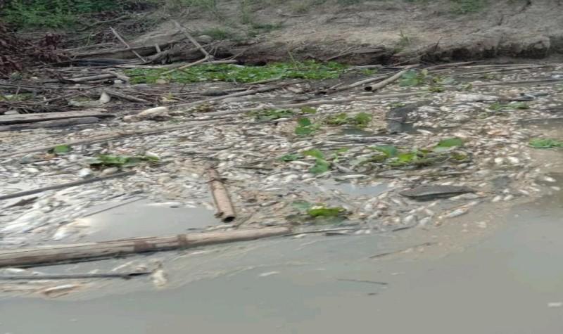 Walhi Desak DLH Usut Industri Penyebab Pencemaran Way Sekampung