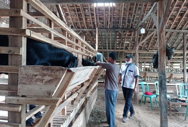 Warga Desa Haduyang di Natar Gerakkan Ekonomi dengan Beternak Kambing