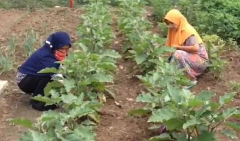 Warga Kecubungmulya Tanam Sayuran Jaga Ketahanan Pangan saat Pandemi