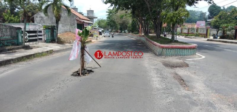 Warga Menggala Tanam Pohon Pisang di Jalan Berlubang