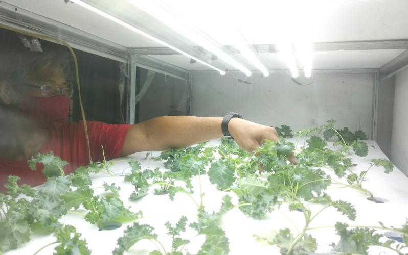 Warga Natar Kembangkan Hidroponik <i>Indoor</i>Ala Jepang