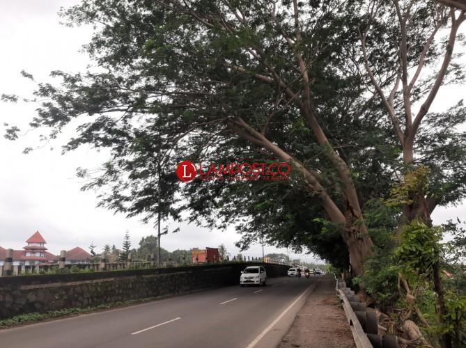 Warga Rajabasa Khawatir Pohon Tumbang