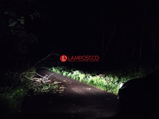 Waspada Pohon Tumbang di Jalan Keluar Tol Menggala