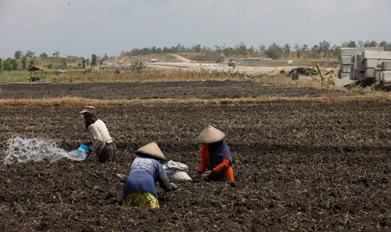 Wirausaha Pertanian Kunci Pemulihan Ekonomi Nasional
