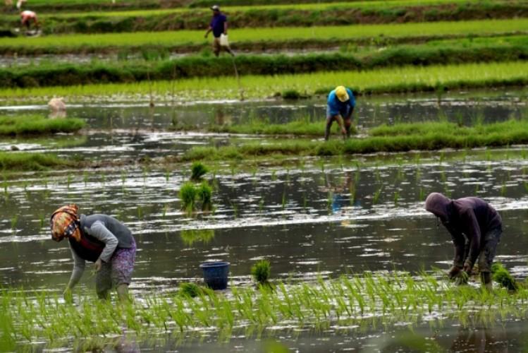 Wujudkan Ketahanan Pangan Ramah Lingkungan dengan Pertanian Organik