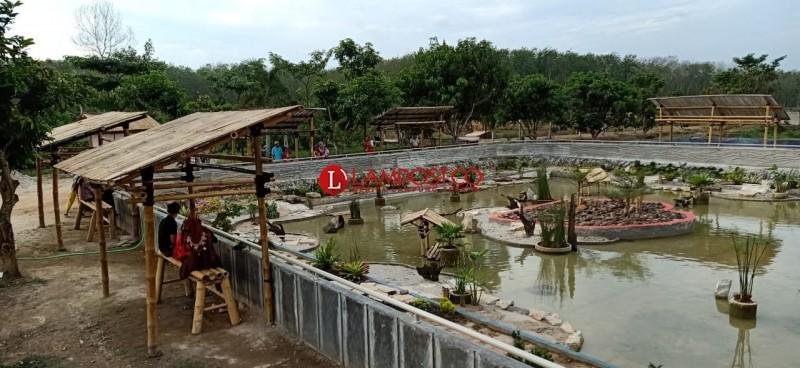 Yayasan Sahabat Alam Lampung Rintis Konservasi Kura-kura di Tubaba